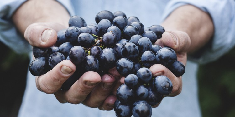 Grape Seeds Extract (Quercitin)