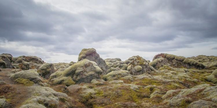 Íslensk fjallagrös